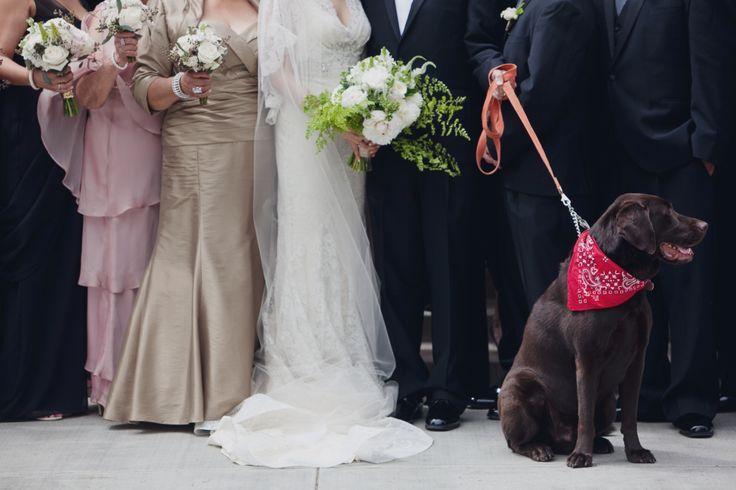 Hochzeit - Hochzeits-Tiere