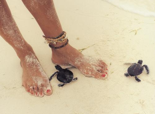 زفاف - الشواطئ وكولاداس بينا