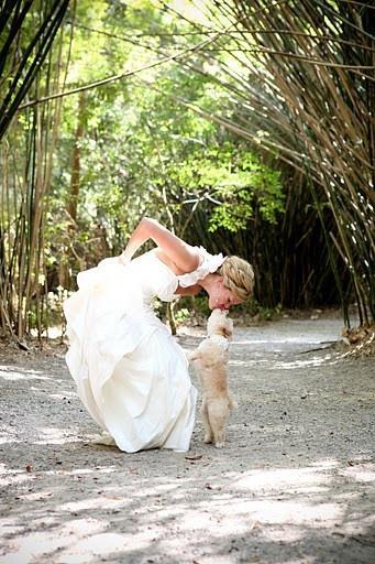 Wedding - Weddings - Pets