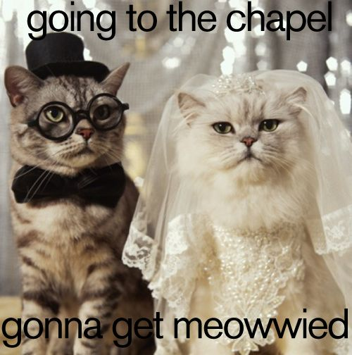 Mariage - Mariages - Animaux