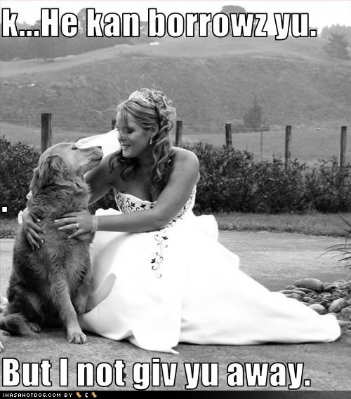 Wedding - Weddings - Pets