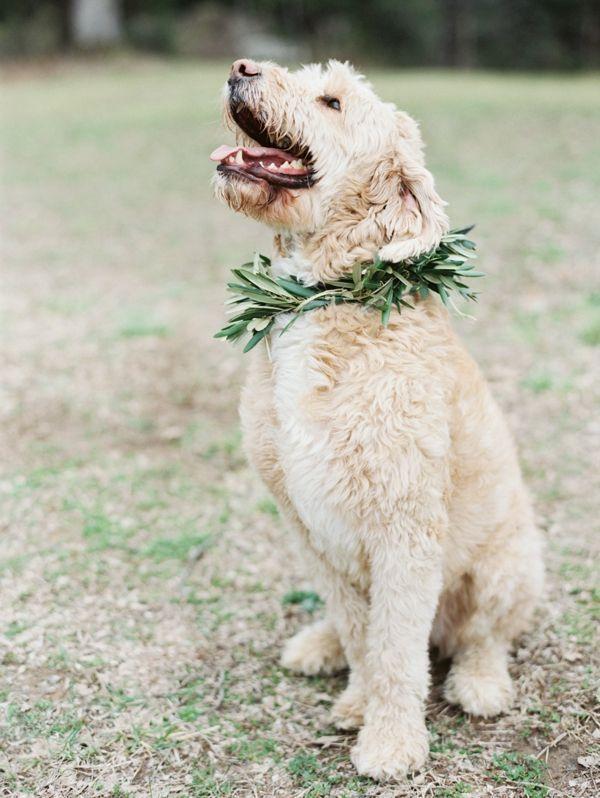 Mariage - Les chiens lors des mariages