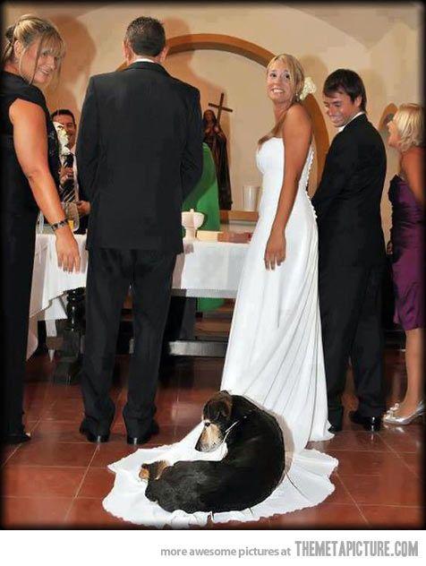 Свадьба - Свадьбы - Допускается