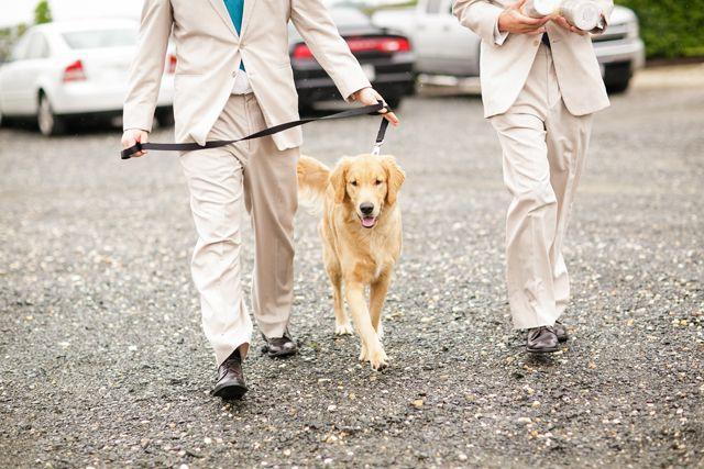 زفاف - حفلات الزفاف - حيوانات أليفة