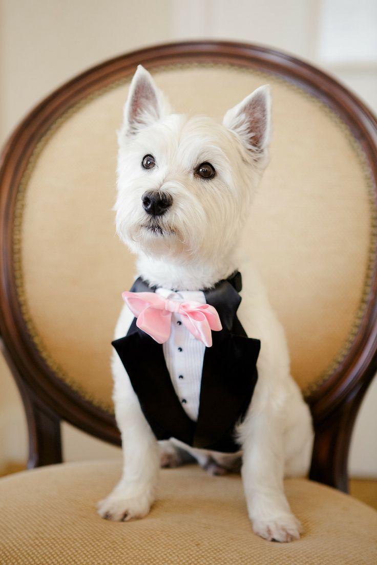 زفاف - الحيوانات الزفاف