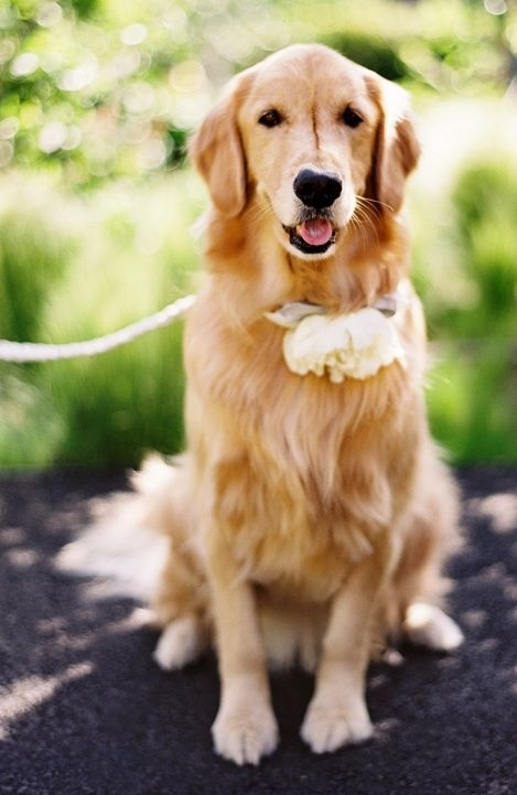 Mariage - Animaux Mariages