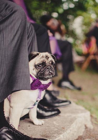 Свадьба - Лиз & марка причудливые ручной Северо-Западный лес свадьбы
