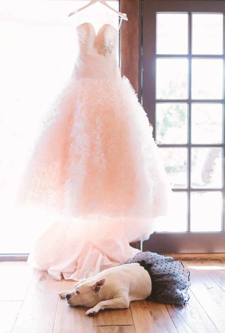زفاف - صور زفاف