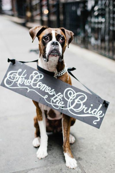 Свадьба - Свадебные Животные