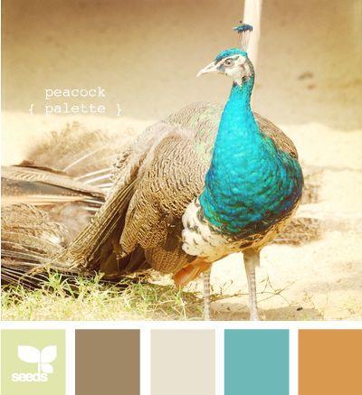 Wedding - ♥~•~♥ Peacock For Wedding