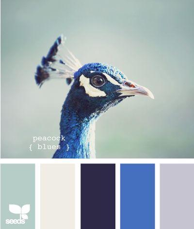 Mariage - ♥ ~ ~ ♥ • Peacock pour le mariage