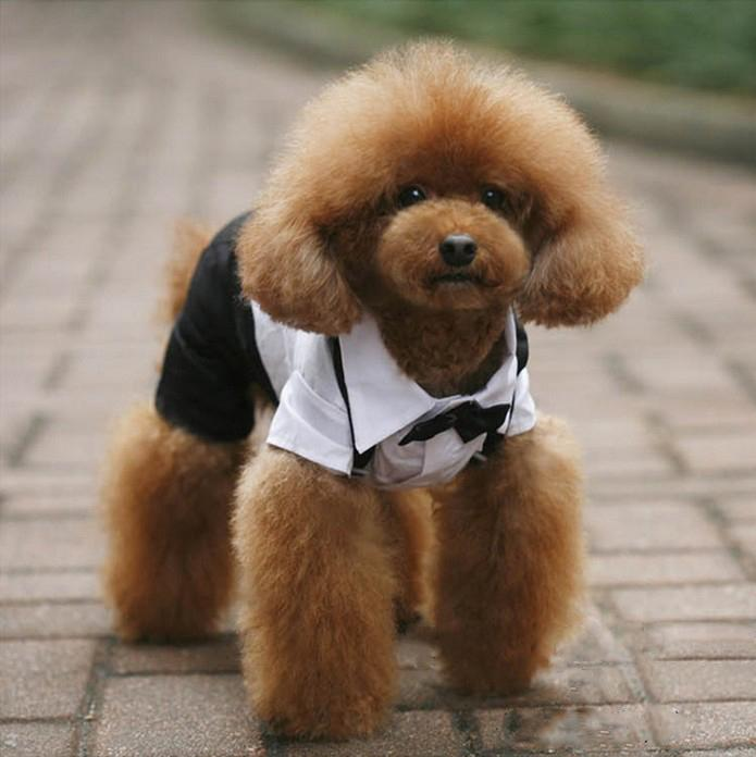 5 Sizes Pet Dog Puppy Teddy Tuxedo Suit Bow Tie Collared Shirt ...