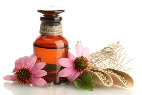 Mariage - Echinacea – A Powerful Antibiotic Given By The Nature