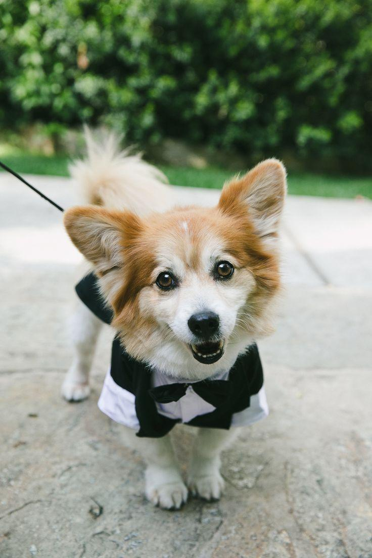 Свадьба - Wedding Pets