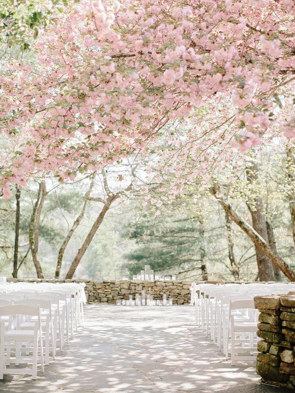 Wedding - Cherry Blossom Wedding