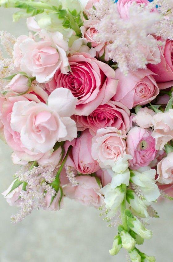David Austin Roses  Rosiers Entretien des Roses et