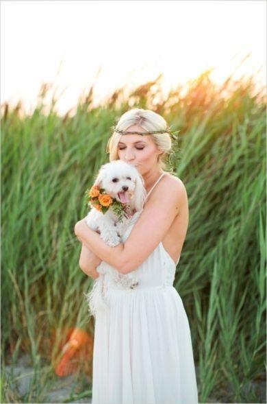 Wedding - Animals At Weddings