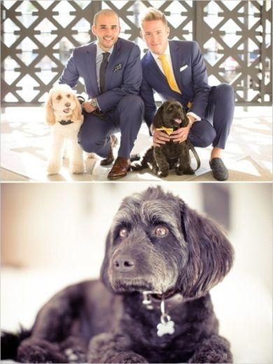 Свадьба - Animals At Weddings