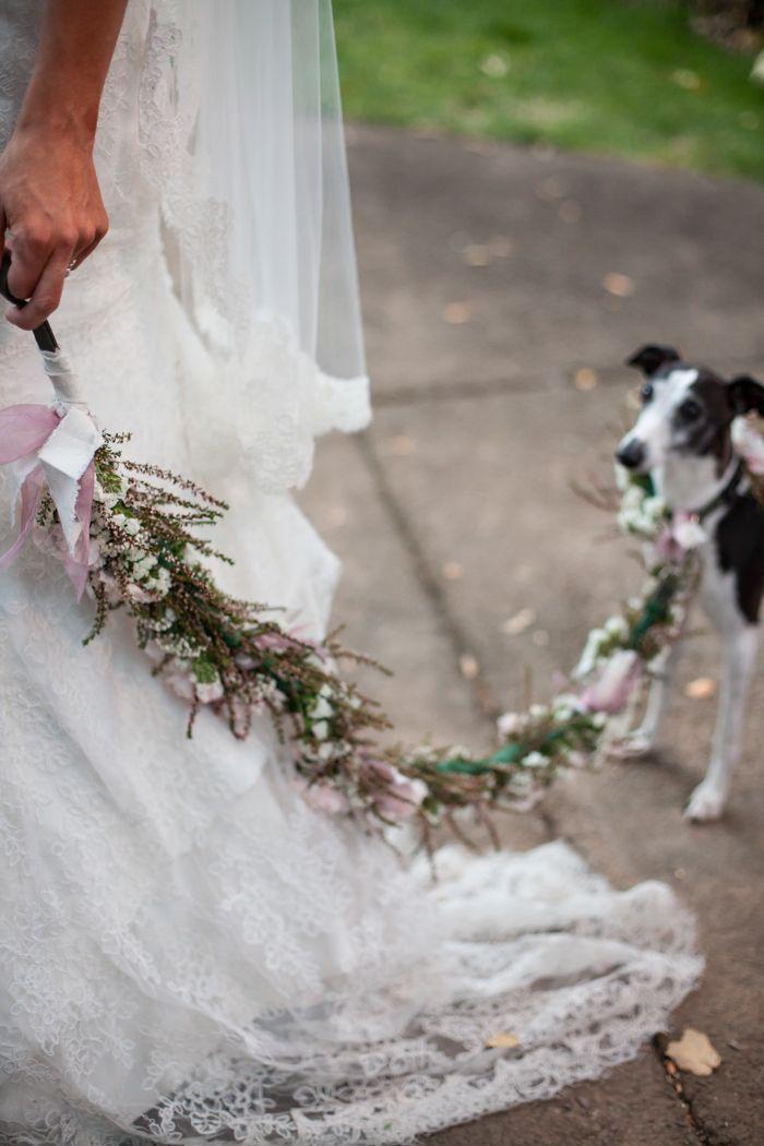 Свадьба - Pets In The Wedding