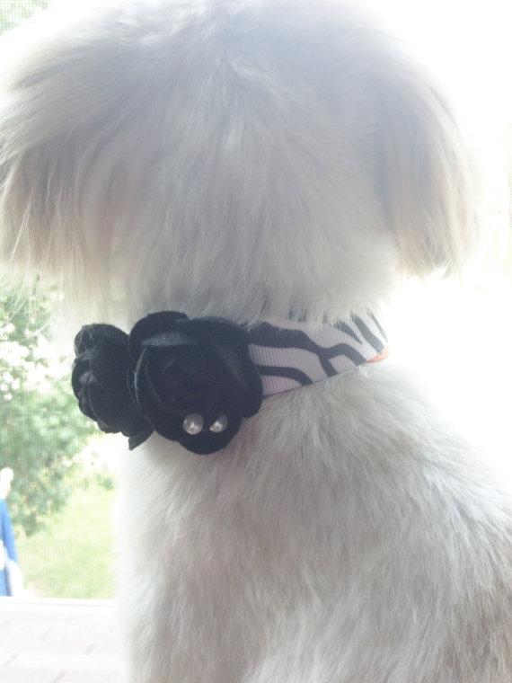 Свадьба - DOG FLOWER COLLAR - Black and white Zebra print black flowers,Pet Wedding,Ties on, Pet Flower Dog Wedding, Pet Corsage, Dog flower , Dog Bow