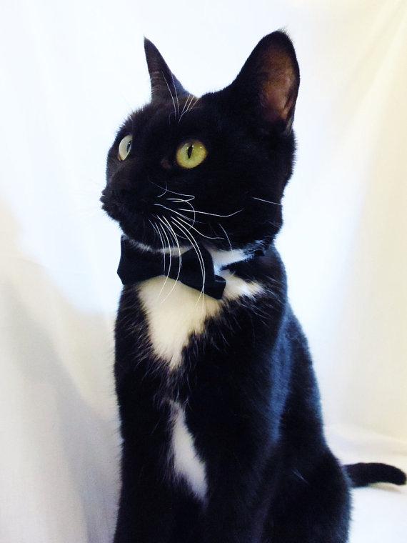 زفاف - Cat Collar Custom Satin Double Bow Tie Cat Collar to match your Wedding Colors pet clothing cat clothing pet clothes