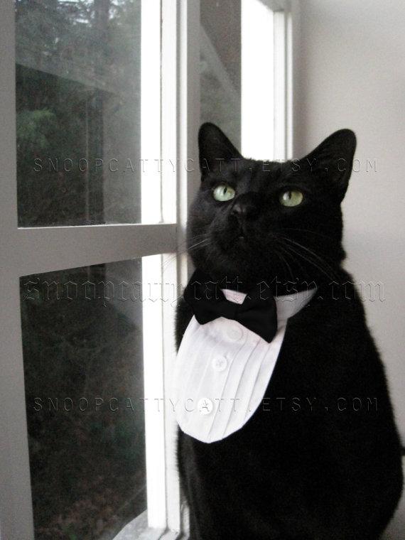Свадьба - Cat Tuxedo - Classic Black Tie