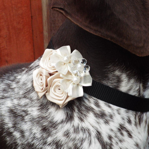 Свадьба - Wedding Ivory Fabric Flower Dog Collar Accessory for Cats and Dogs - Great Wedding Accessory for your pet!