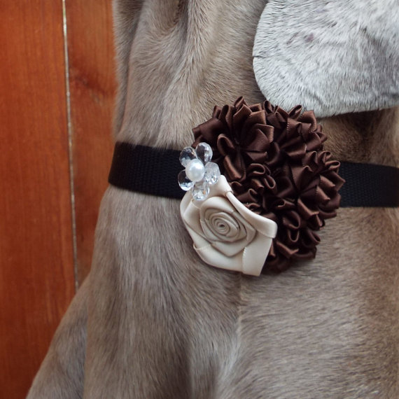 زفاف - Brown & Ivory Fabric Flower Dog Collar Accessory for Cats and Dogs - Great Wedding Accessory for your pet!
