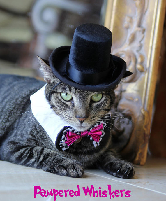 Свадьба - The Aristocrat black top hat for cats and dogs (hat only)