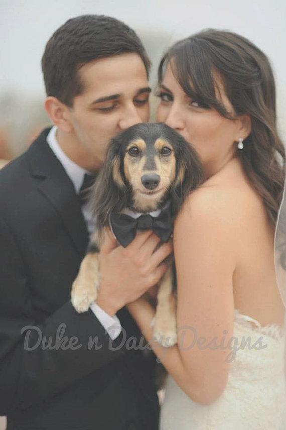 Black Satin Wedding Dog Bowtie Dog Bow Tie Dog Wedding Collar Dog