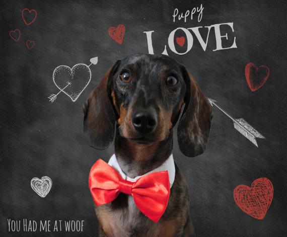 زفاف - Dog Bow Tie Collar, Cat Bow Tie Collar, Photography Prop, Dog Clothes - Choose Your Color