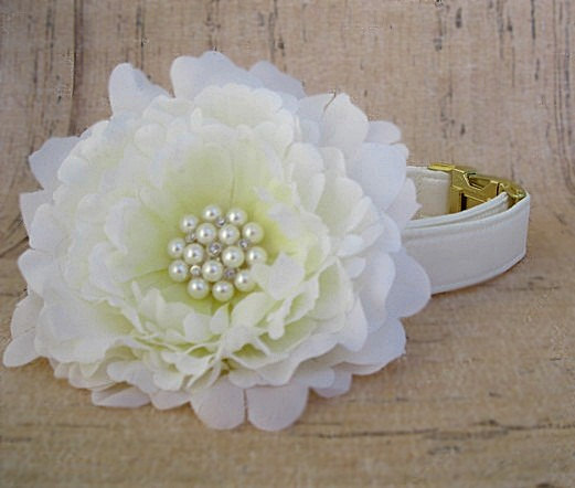 Свадьба - Ivory Satin Dog Collar with Brass Hardware and Large Flower Accessory