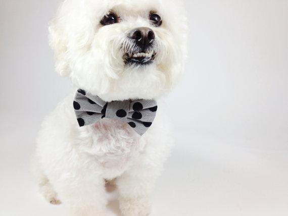 Свадьба - Bow tie- dog collar accessory- black polka dot print bow tie- wedding dog collar- pet bow tie- cat bow tie