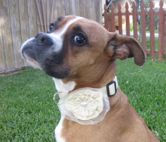 زفاف - Dog Collar and Flower Bow Rossette Yellow Wedding Photo Prop