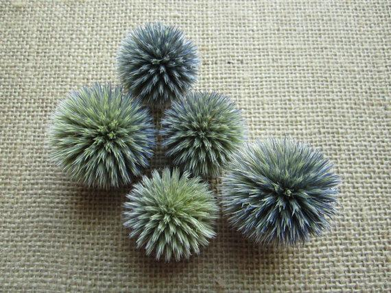 Mariage - Dried Globe Thistle heads -- set of 12  -- Preserved
