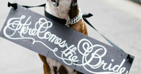Wedding - 21 Impossibly Adorable Wedding Day Dogs