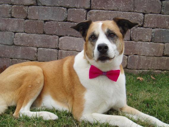 Свадьба - Dog Bow Tie Collar Attachment, doggie bowtie FUSCHIA PINK Pet Clothing party wedding formal birthday