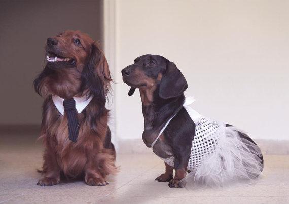 زفاف - Custom Dog Wedding Collar, Pet Necktie Collar, Dog Tie Collar, Dog Necktie, Dog Clothes, Cat Tie Collar, Cat Necktie