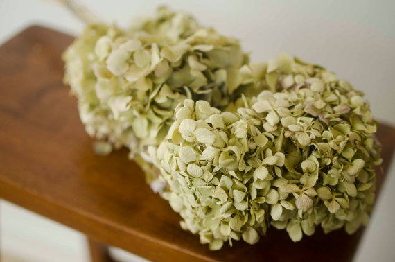 Свадьба - Large bunch of naturally dried green hydrangeas, green hydrangeas, dried hydrangeas, green decor, green wedding, wedding decor