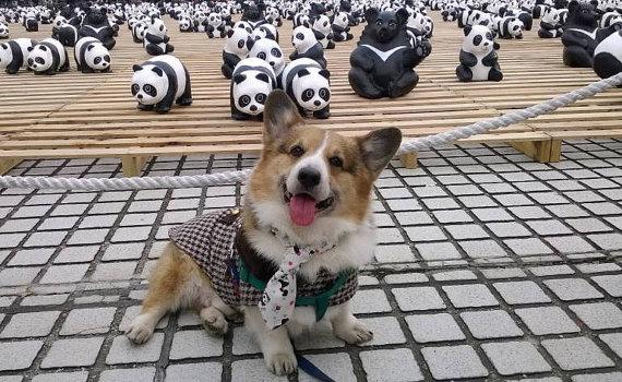 Свадьба - Dog tie Four in hand knot panda print pet necktie dog collar pet tie Dog Holloween Party Photo prop Wedding black white panda neck tie