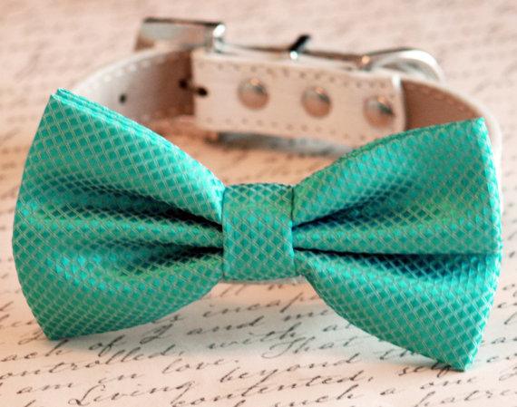 زفاف - Aqua bow tie attached to leather dog collar, Chic Dog Bow tie, Pet Wedding Accessories, 2014 Wedding Accessories
