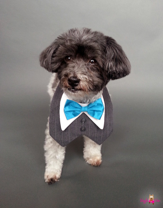 Свадьба - Charcoal Gray Pin-Striped Wedding Dog Tuxedo with Your Choice of Bow Tie Color
