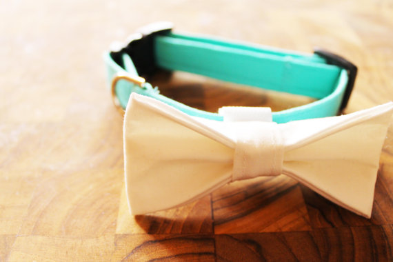 Свадьба - Adjustable Tiffanys Blue Dog Collar with Removable White Bow tie
