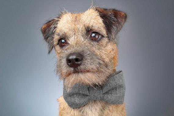 Свадьба - Dog Bow Tie - Black & Grey Herringbone Tweed
