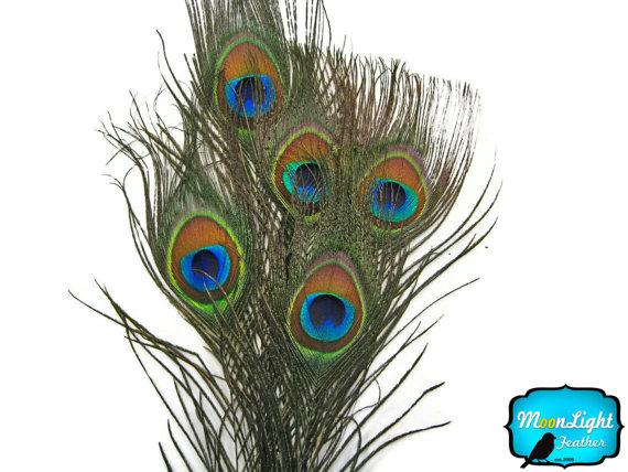 زفاف - Small Peacock Feathers, 10 Pieces - SMALL NATURAL Peacock Tail Eye Feathers : 353