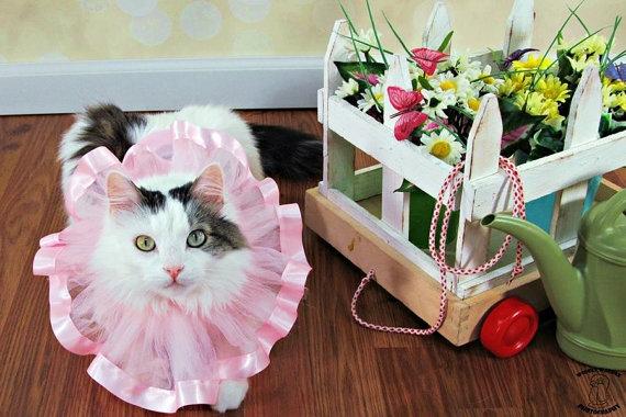 زفاف - Tutu Cat/Dog Collar...Pet Collar...Pet Tutu...Wedding Tutu...Flower Girl Tutu