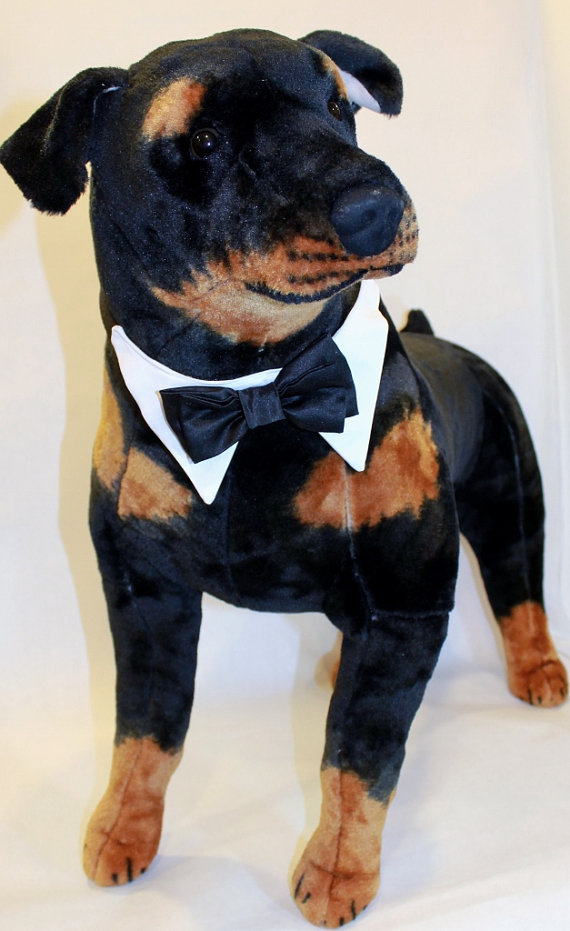Свадьба - Wedding Dog Collar with Shirt Collar and Satin Double Bow Tie Dog Collar pet clothes