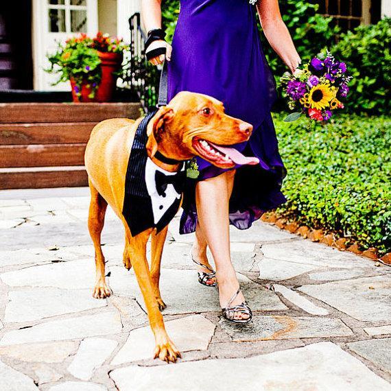 زفاف - Dog Tuxedo Bow Tie Wedding Special Event