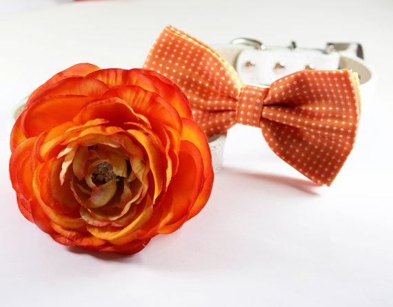 زفاف - Orange wedding Dog Collars - 2 Chic Wedding Dog Collars, Orange dog bowtie and Orange Floral Dog Collar with Rhinestone