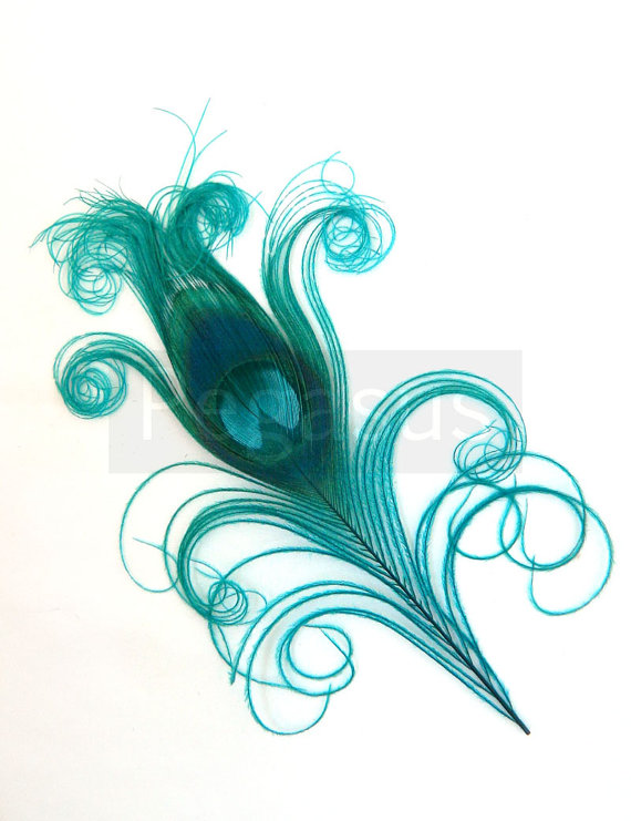 Mariage - TEAL BLUE Curled Peacock Feather Eyes (6 Small or Large feather)  DIY feathers for wedding invitations, bouquets, center pieces, millinery